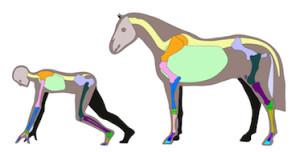 paard-mens